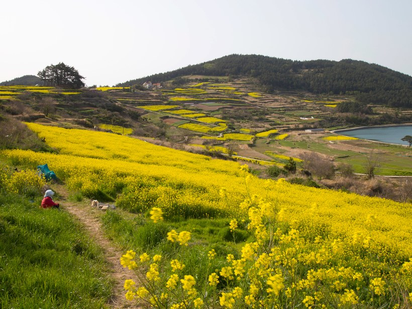 The Most Beautiful Places in South Korea