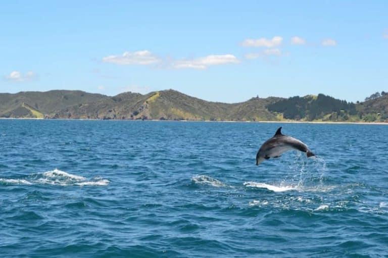 The Best New Zealand Summer Destinations