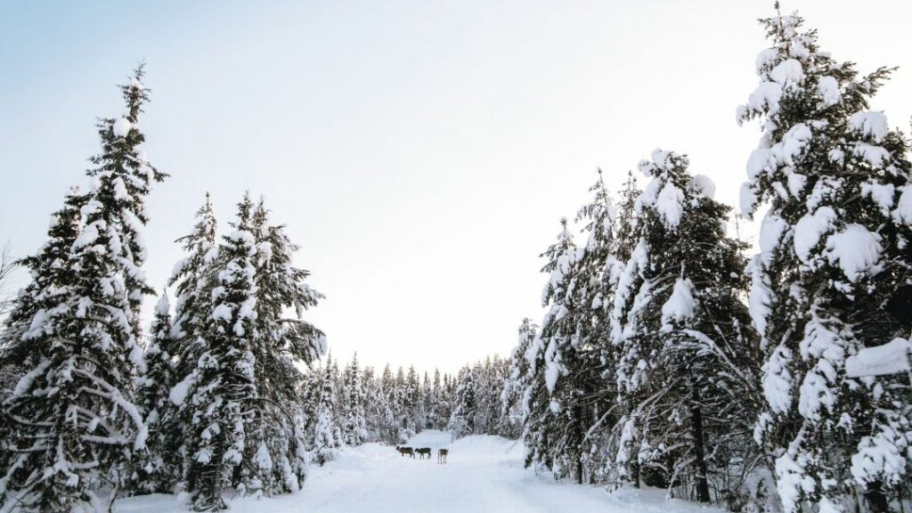 Lapland's a winner for families