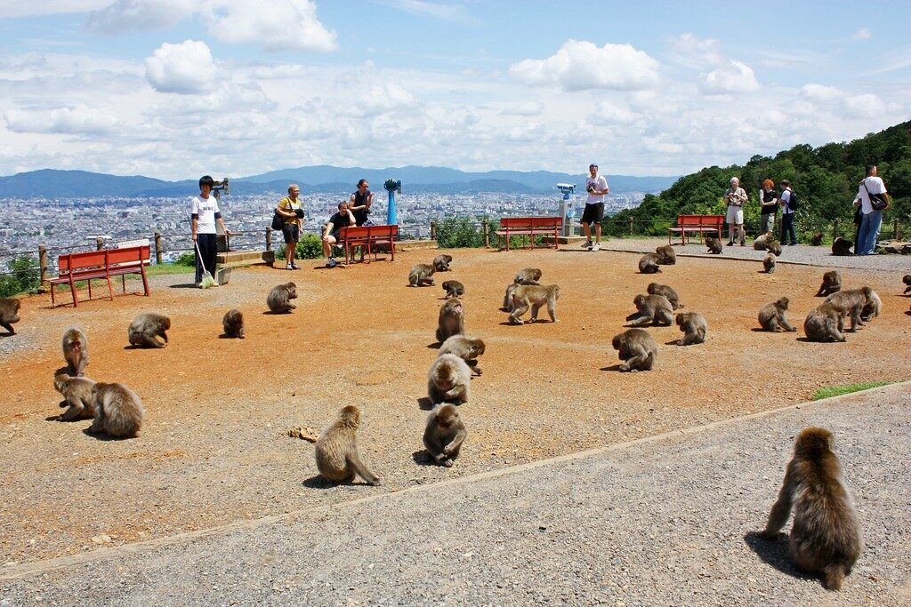 monkeys at Arashiyama Monkey