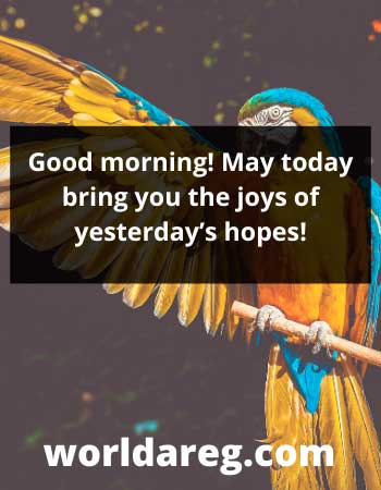 today bring you the joys words